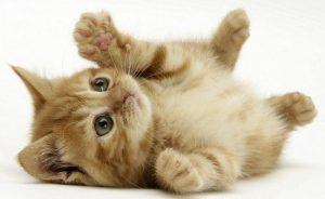 Como adotar um gatinho - Saiba onde escolher