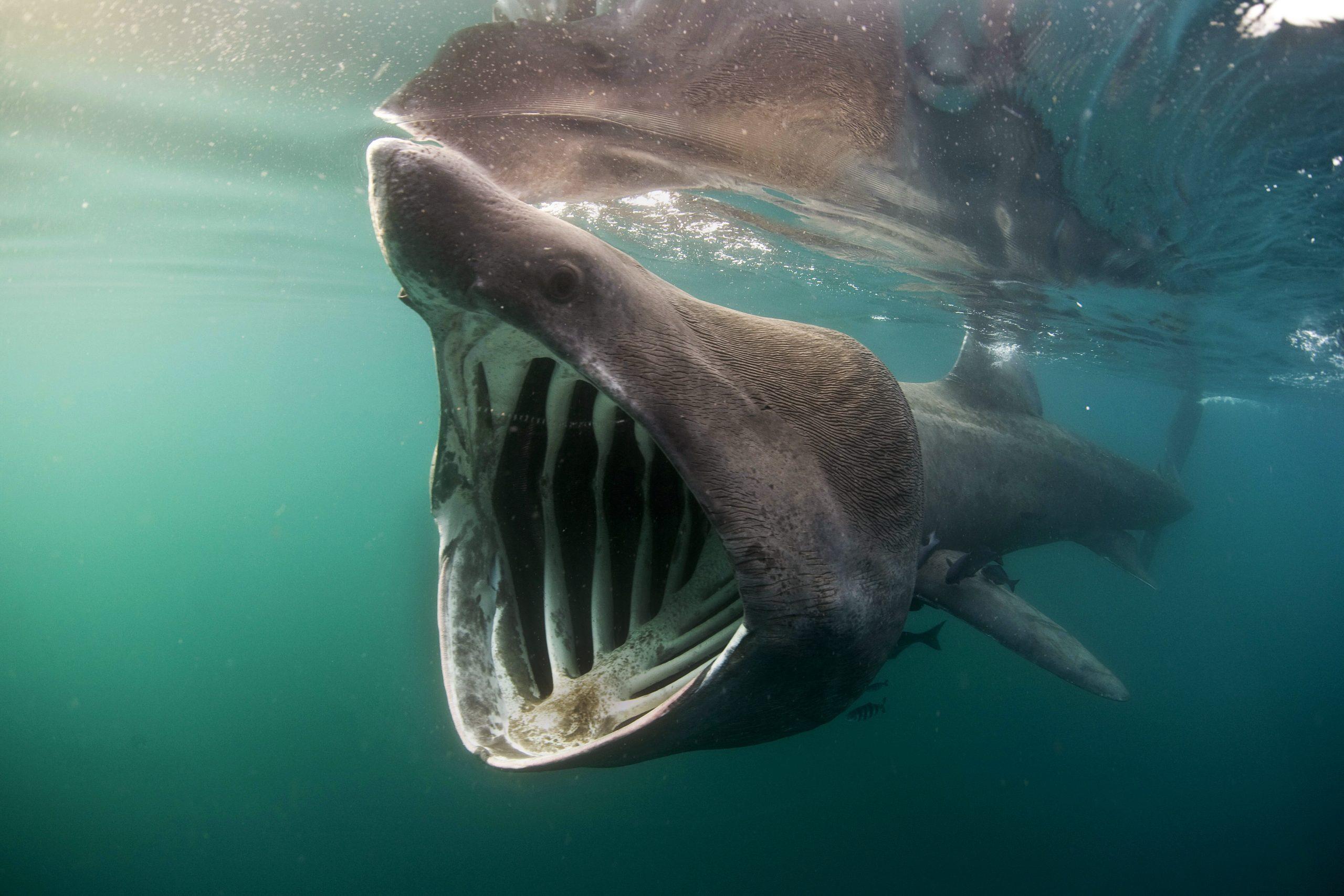 Video gravado de barco mostra o momento exato em que um grande tubarão o circunda