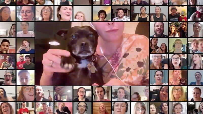 Empresa australiana promove um coral no qual cachorros irão 'cantar' música do Imagine Dragons