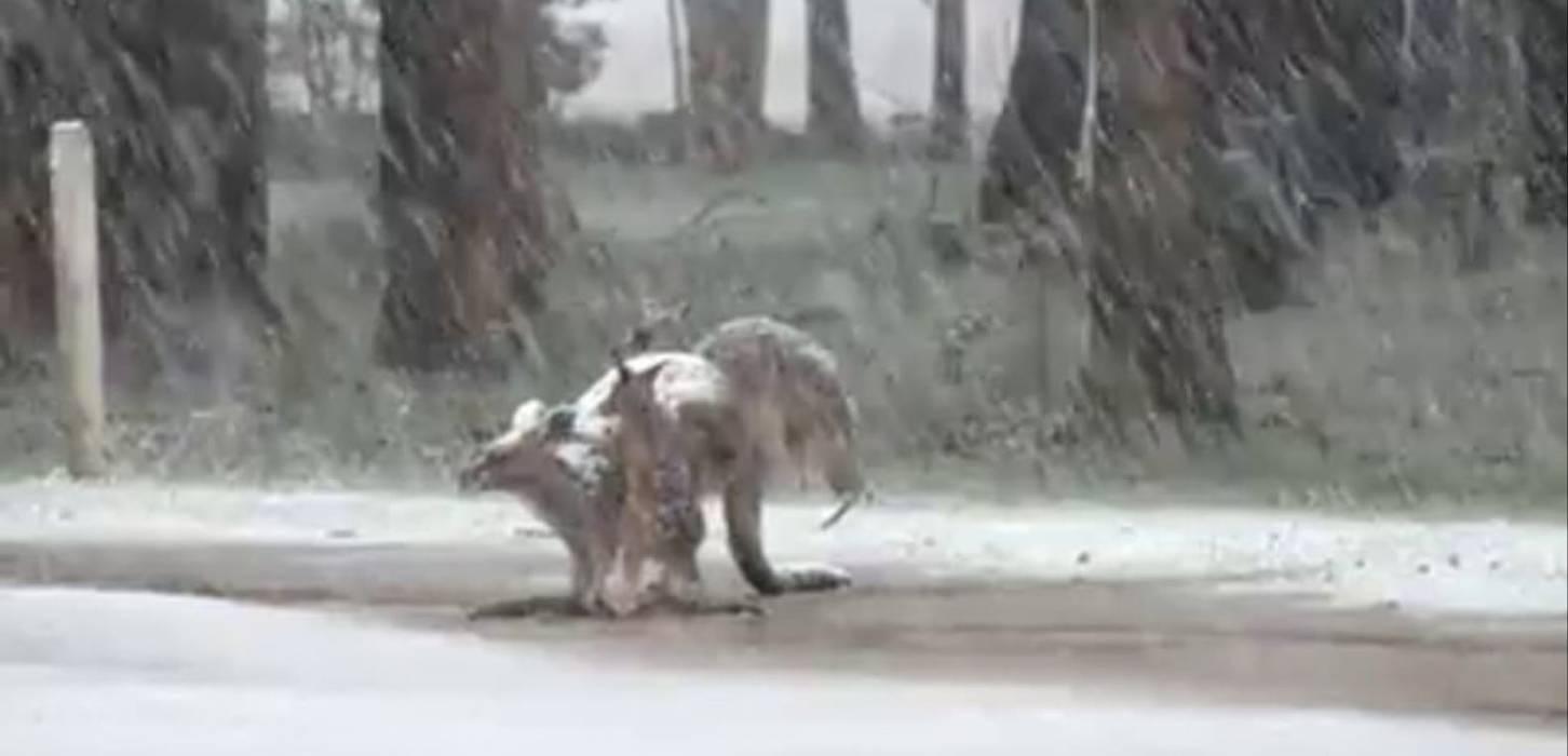Austrália, de calor intenso e incêndios à neve