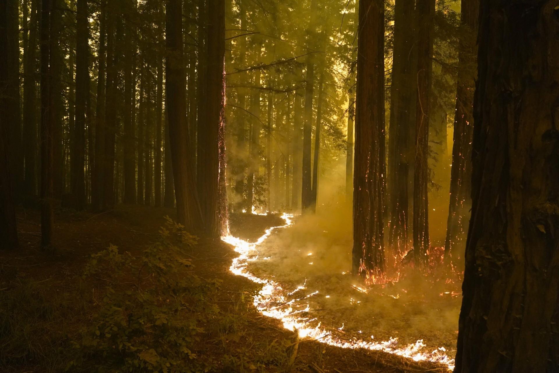 Califórnia clama por ajuda australiana para enfrentar os fortes incêndios que atormentam o estado