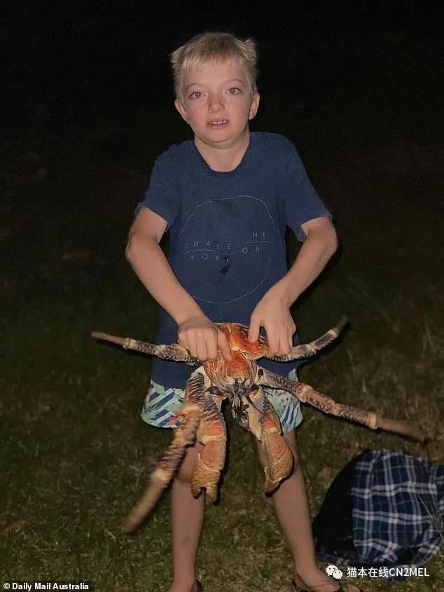 Piquenique em família é invadido por caranguejos gigantes na Austrália
