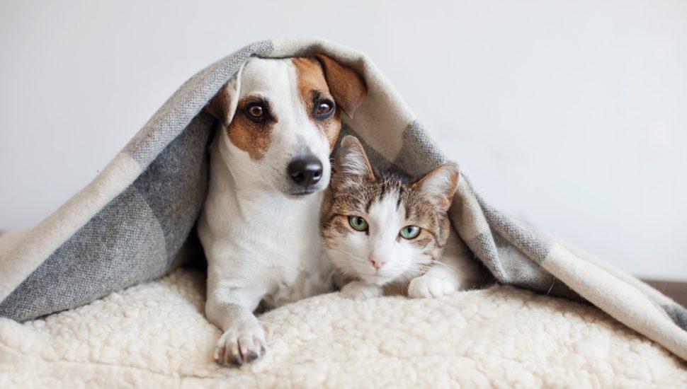 Estudo descobre que os gatos podem pegar o coronavírus