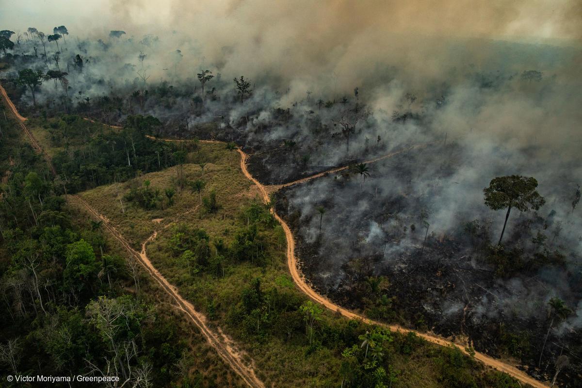Floresta Amazônica sofre o pior começo de temporada de incêndios da última década