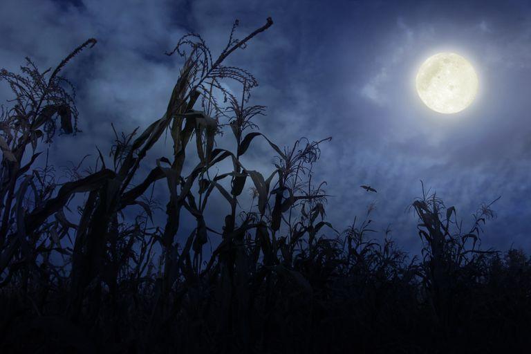 Reino Unido presencia o espetáculo da Lua de Milho