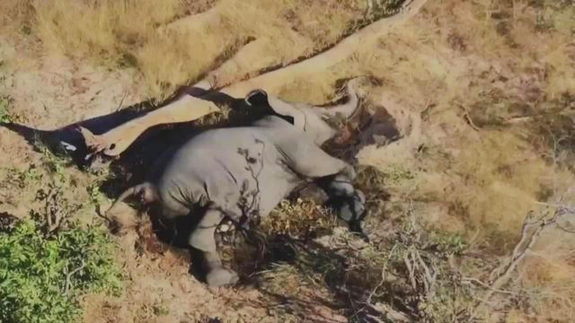 Toxinas na água causam a morte de mais de 300 elefantes na África