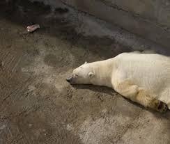 Homem é arrastado de sua cabana e morto por urso polar na Noruega