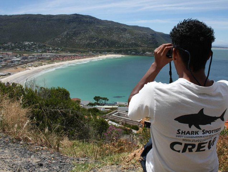 Drone captura momento em que surfistas desavisados são espreitados por tubarão