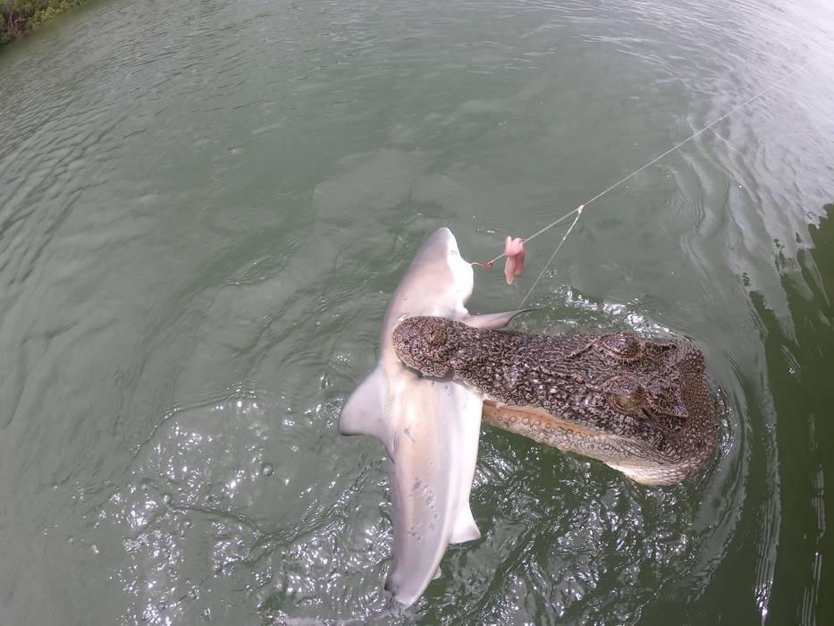 Homem pesca tubarão mas o perde para crocodilo